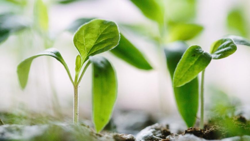 Minerals Lacking in NZ Soils